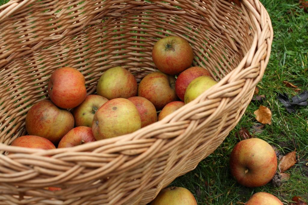 Æbler til gammeldags æblelage