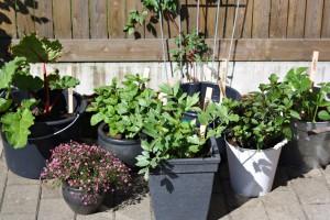 Vores lille have