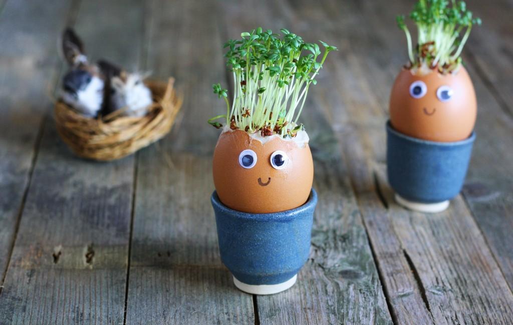 Karse i æggeskaller